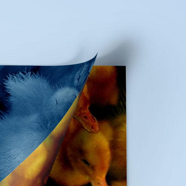 21graphisme-design-editorial-conception-edition-livre-book-memoire-les-aventures-de-saturnin-