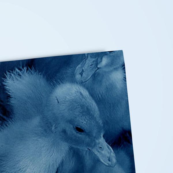 34graphisme-design-editorial-conception-edition-livre-book-memoire-les-aventures-de-saturnin-