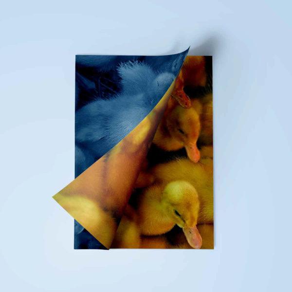 54graphisme-design-editorial-conception-edition-livre-book-memoire-les-aventures-de-saturnin-