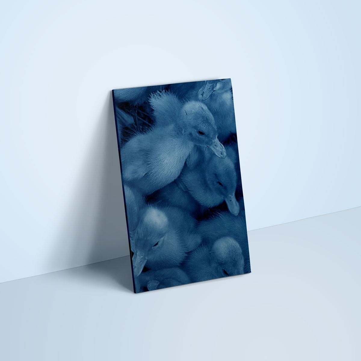graphisme-design-editorial-conception-edition-livre-book-memoire-les-aventures-de-saturnin-
