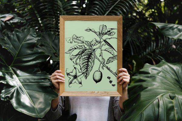 brugmansia-style-botanique-vintage-2